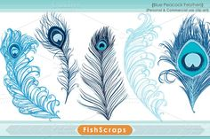 Royal Blue Peacock Feathers #CreativeMarket #Peacock #PeacockFeathers #ClipArt #PeacockClipArt #Digital #DigitalGraphics #Graphics #Feathers