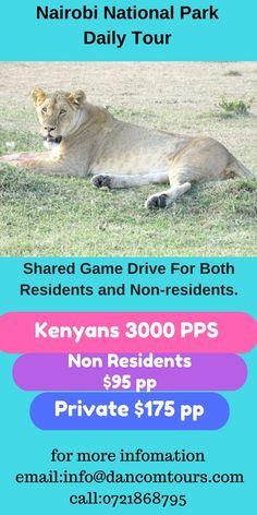 Flights to Nairobi, Climb Kilimanjaro, Masai Africa Safaris Safari Holidays, Tanzania Safari, Kilimanjaro, Travel Companies, Nairobi, African Safari, Day Tours, Kenya, National Parks