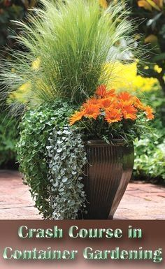 The first step to successful container gardening is to uncover the mystery surrounding the pots and containers you'll have to choose from... #ContainerGarden #containergardening