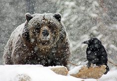 Crow and Bear ~ Photographer: Michael Burdic | Wintery Illusions with D.o.F. by moosewhisper on Flickr
