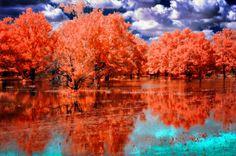 黄金の瞬間 河川 自然 高解像度で壁紙