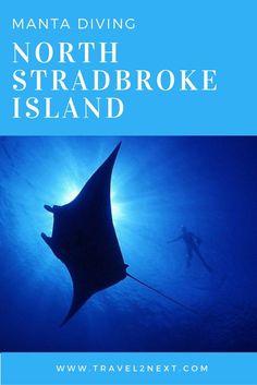 manta diving north stradbroke island Manta diving   North Stradbroke Island