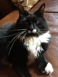 r https://www.facebook.com/groups/826596090765624/permalink/882023468556219/ Black white fluffy  Dee LazarCT Animal Recovery Lost Cats in CT October 11 ·    This is Stache Lost 10/1/2015 Shelton Ct. All black with white mustache chest and paws. Last seen on 10/10/2015 in Meadow Lake condo's Shelton CT. Stache is an indoor cat