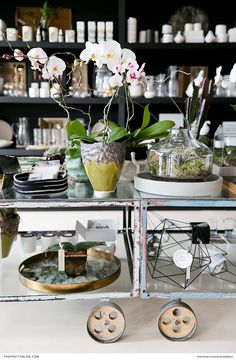 The sophisticated lady, retreating to a meticulously curated home, would be smitten with this elegant orchid from Madam Botany. Knysna, Lifestyle Store, Beach Fun, Summer Of Love, Botany, Contemporary, Modern, Orchid