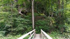 Ausflugsziel in Niederösterreich Plants, Road Trip Destinations, Door Entry, Woodland Forest, Vacation, Plant, Planets
