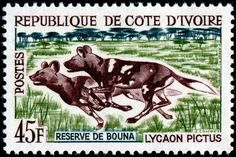 Stamps of Small Animals / Mammals / Fauna - Stamp Community Forum - P. - Nabil Ben Chama - Stamps of Small Animals / Mammals / Fauna - Stamp Community Forum - P. Stamps of Small Animals / Mammals / Fauna - Stamp Community Forum - Page 4 - African Hunting Dog, African Wild Dog, Hunting Dogs, All Nature, Science Nature, World Wild Life, Old Stamps, Wild Dogs, Ivory Coast