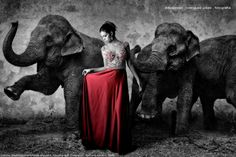 """https://flic.kr/p/K1LJaE   Camila  Jul 2016  16   Camila based in """"Dovima With Elephants"""", Richard Avedon 1955 ../ Book Fotografico de Alta Costura / Modelo: Camila Rabelo / Local: Brilho De Noiva / Belo Horizonte, MG // Fotografia: Artexpreso . JL Rodriguez Udias / *Photochrome Artwork Edition . Jul 2016 .. Website: rodudias.wix.com/artexpreso #artexpreso #altacostura #fashion"""