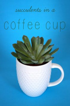 succulents in a coffee cup #TargetWedding #sponsored