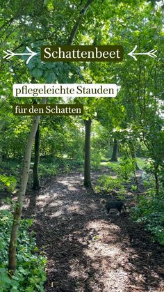 Shadow Plants, Shade Perennials, Gardening, Aster, Shade Garden, Flower Beds, Japan, Baroque, Fruit Garden