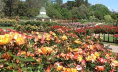 werribee farmers market - Google Search Gate 2, Free Entry, Melbourne, Sydney, Where To Go, Tourism, Victoria, Mansions, Park