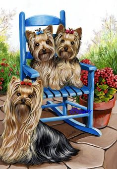 photo Yorkie20Patio20Sweethearts207220dpi20GF1007.jpg