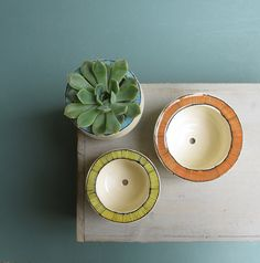 Green succulent plant in ceramic pot with orange by catherinereece, $20.00