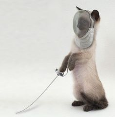 Fencing cat, lots of weapons and one long one. Enough said.