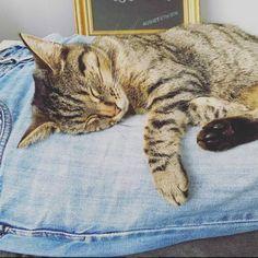 LOST CAT: 26/06/2017 - Whalley Range, Greater Manchester, England, United Kingdom. Ref#: L32191 - #CritterAlert #LostPet #LostCat #MissingCat