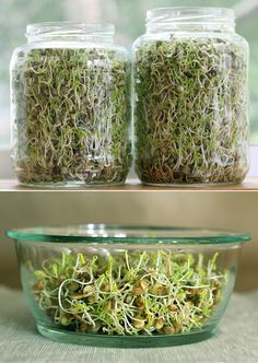 """Ridiculously easy way to grow sprouts for your lunch."" Small Garden Ideas #garden #gardening"