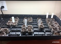 Indoor Seed Starting: Test 1 // posted on THE JOY BLOG // Click to see full post // Garden Updates