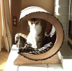 Image detail for -Cat Bed, Cool and Affordable, But Hard to Find! | moderncat :: cat ...