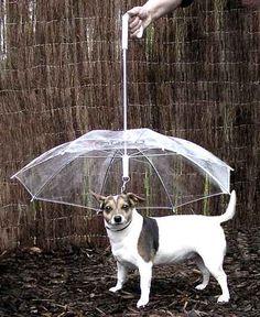 Cute umbrellas and rain boots!  (http://celesteandpearl.blogspot.com/2013/04/fo-drizzle.html)