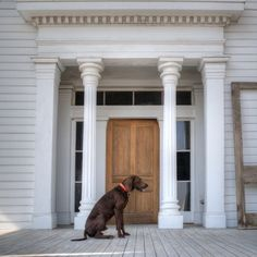 Porch Dogs - Nell Dickerson -- The Delta of Mississippi