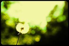 #naturephotographeratlanta