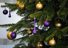 Close up of Gold and Purple REAL Christmas Tree in Reading UK office