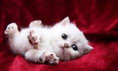 Resultado de imagem para gatos lindos fotos