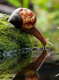 Macro photography...  wow, a snail having a drink !! Brilliant photography!!