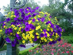 Good Potted Flowers for Summer | Potting Soil Makes Hanging Baskets Resilient