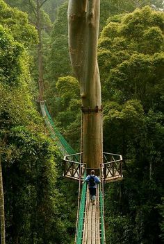 Amazing - I need to go here. Borneo - - Amazing – I need to go here. Borneo My bucket list of places to see or places to stay Amazing – I need to go here. Places Around The World, The Places Youll Go, Places To See, Around The Worlds, Borneo Rainforest, Amazon Rainforest, Brazil Rainforest, Rainforest Plants, Adventure Is Out There