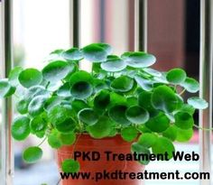 Gotu kola is often used in traditional Chinese medicine. Can gotu kola help reduce kidney cysts? The answer is certain. Gotu kola can help you control many symptoms of kidney cysts so as to protect your kidney function.