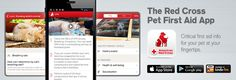 Download the Red Cross Pet First Aid App!