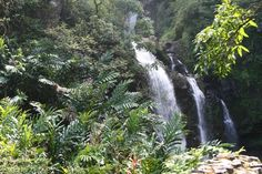 There are many waterfalls along the way, on the road to Hana