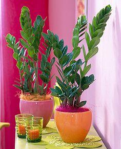 долларовое дерево Herb Garden, Home And Garden, Purple Plants, Crassula Ovata, Plants Are Friends, Farm Gardens, Garden Planning, Trees To Plant, Houseplants
