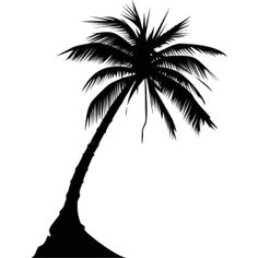 palmtree ❤ liked on Polyvore featuring photos