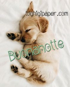 Good Night, Good Morning, Argo, Westies, I Love Dogs, Labrador Retriever, Animals, Good Morning Wishes, Frases