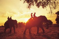 I HAVE to ride an elephant in Africa before I die. Adventure Bucket List, Adventure Is Out There, African Elephant, African Safari, Thailand Elephants, Elephant Ride, Before I Die, Travel And Leisure, Places To Go