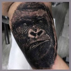 """Silverback Gorilla done at @inkaholik_birdroad by @BoloArtTattoo Follow ↔@MrColombia↔..↔ @BlueInkaholikTattoo ↔ and visit InkaholikTattoos.com for…"""