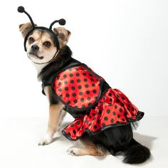 2012 Costumes: What a cutie!! (Dog Halloween Costume - Discontinued 2012)