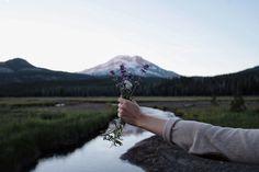 kylmec:  mountain flowers  instagram.com/kylmec