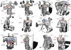 Best Shoulder Building Exercises