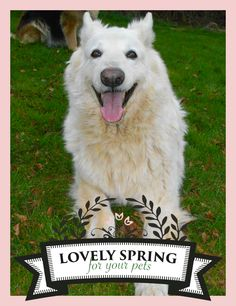 """DO YOU WANT TO WIN PRIZES?! Let's play with Zolux and Yummypets to win it! Just follow the steps below: Follow Zolux on Pinterest: http://ymp.io/u/Dlm / Follow Yummypets on Pinterest: http://ymp.io/u/tvb / Follow the board """"Lovely spring for your pets !"""": http://ymp.io/u/sei / Repin the products you want / Results on April 13th 2015. GOOD LUCK! #game #pets #rodent #bunny #petsupply #gift #pinterest #yummypets #zolux"""