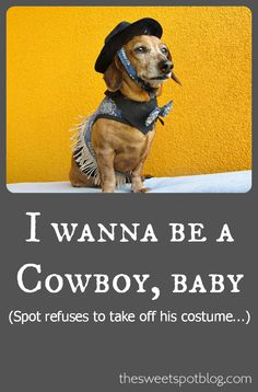 halloween costumes for dogs by the sweet spot blog httpthesweetspotblogcom