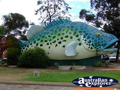 Swan Hill, Murray Cod