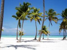 palmeras relajantes