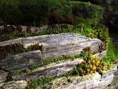 Petrified Wood garden