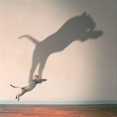 The Dreamer — Kitten pounce.