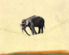 Elephant funambule