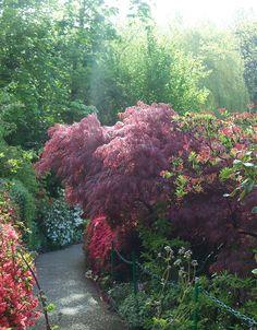 Claude Monet's garden added to bucket list.