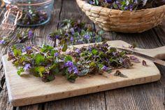 Teeaineksia luonnosta: kanervaa, voikukkaa ja horsmaa Succulents, Pesto, Plants, Wellness, Succulent Plants, Plant, Planets