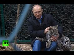 Video: President Vladimir Putin enters the  leopard cage at Sochi National Park